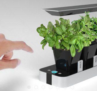 BB Little Garden: il mini giardinaggio