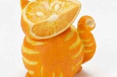 Gatto con arancia