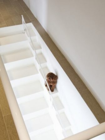 La scala per cani