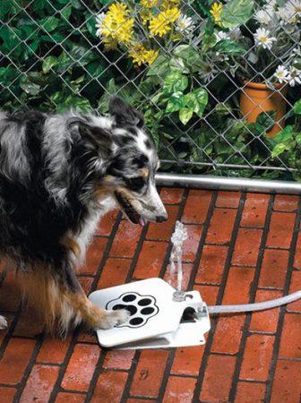 API Doggie Fountain F-1
