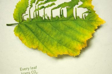 Illustrazioni Cut Leaf per 'Plant for the Planet'