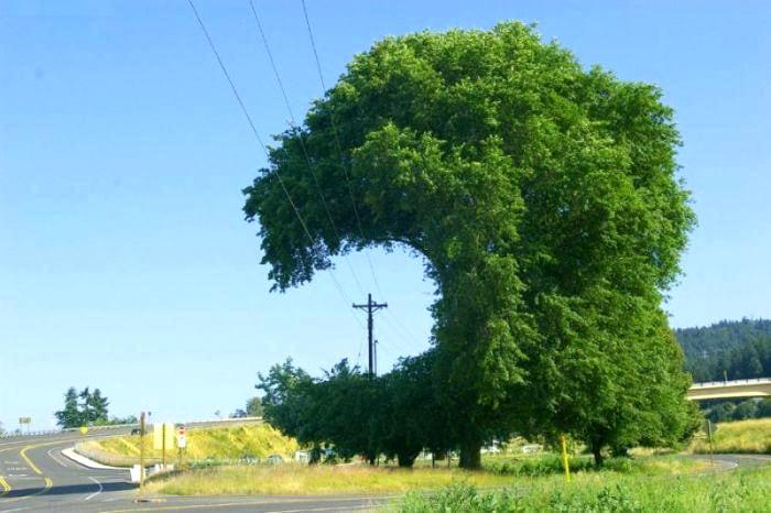 alberi-natura-salva