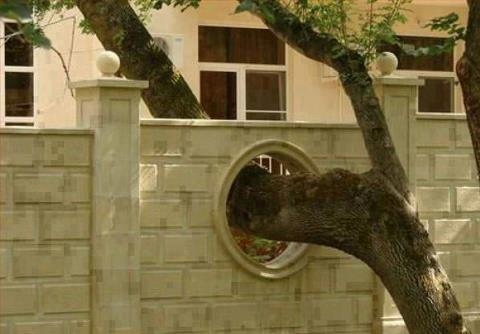 save-trees-wall