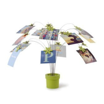 Petal photo display