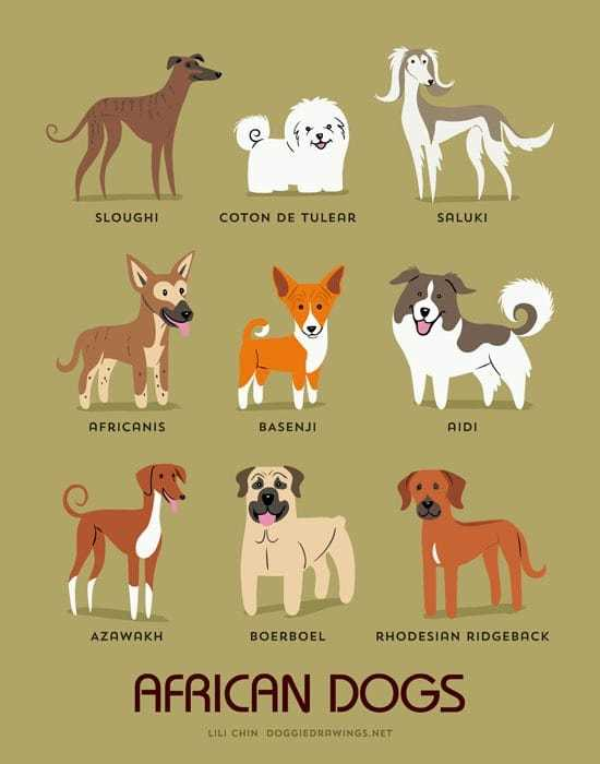 african-dogs-illustration-by-lili-chin