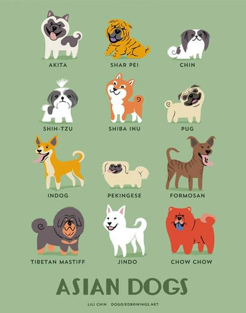 asian-dogs-illustration-by-lili-chin