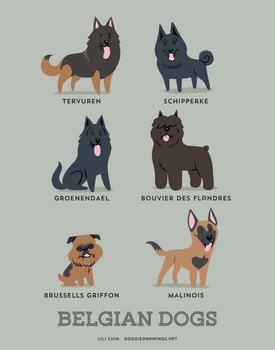 belgian-dogs-illustration-by-lili-chin