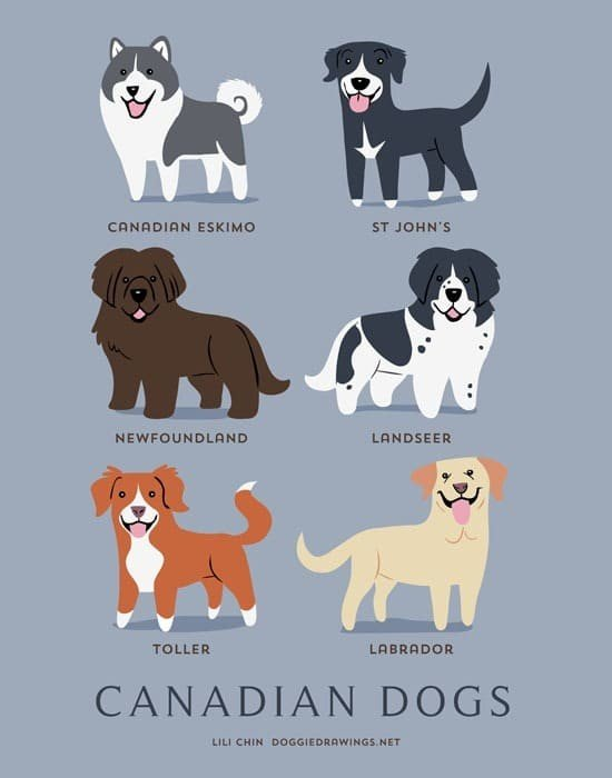 canadian-dogs-illustration-by-lili-chin