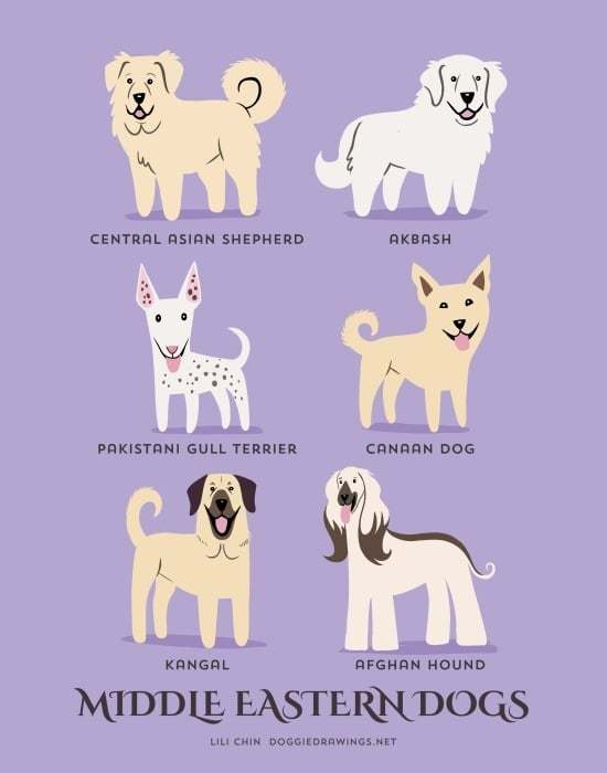 dogs-illustration-by-lili-chin