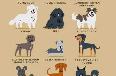"""Illustrazioni """"Cani del Mondo"""""""