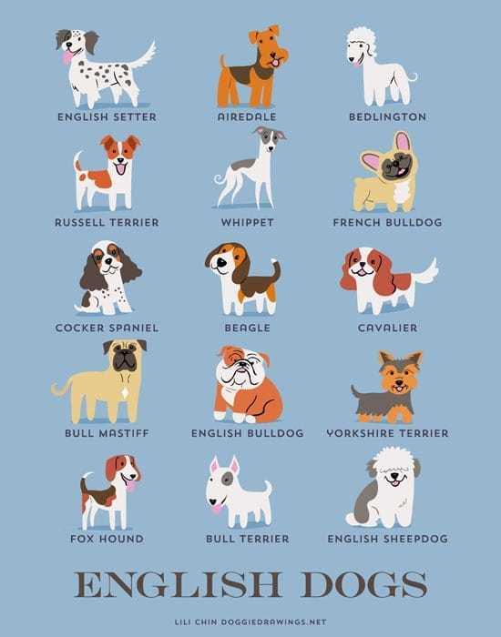 english-dogs-illustration-by-lili-chin