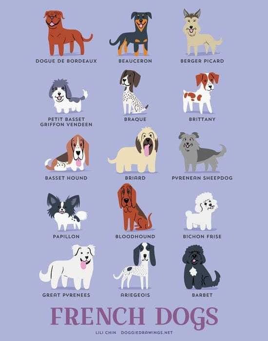 french-dogs-illustration-by-lili-chin