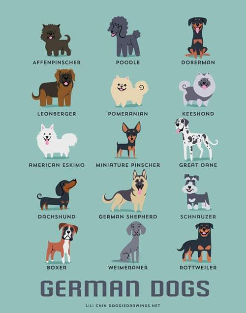 german-dogs-illustration-by-lili-chin