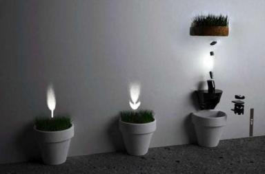 Kit per piante Schattengewächs