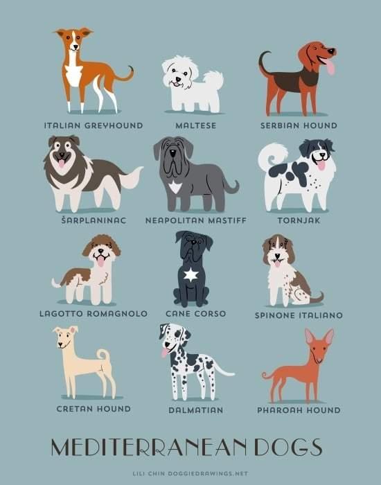 mediterranean-dogs-illustration-by-lili-chin