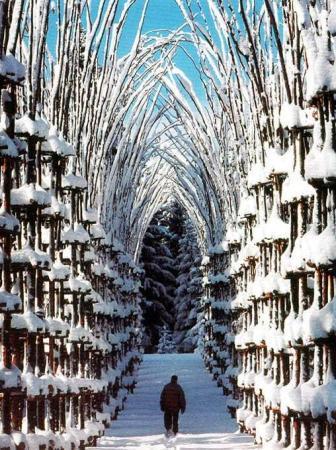 La Cattedrale Vegetale e l'arte dell'intreccio