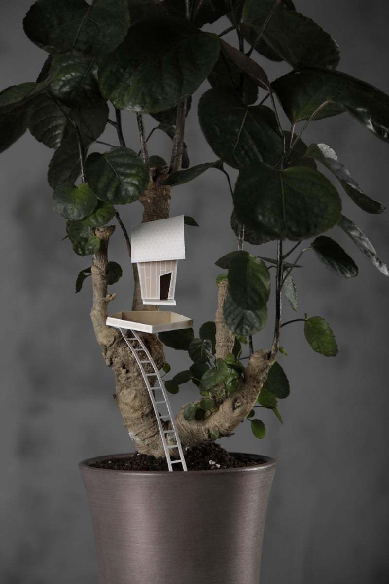 decorazioni-piante