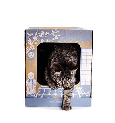 accessori-gatti