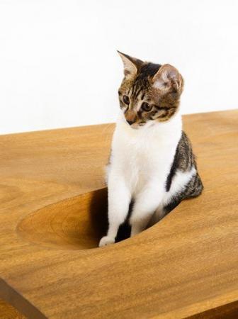 CATable, arredamento di design da condividere con il proprio gatto