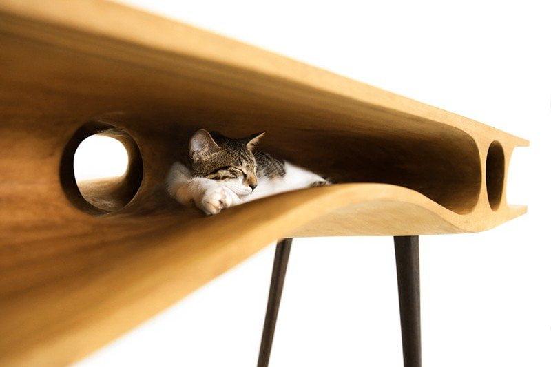 gatti-domestici