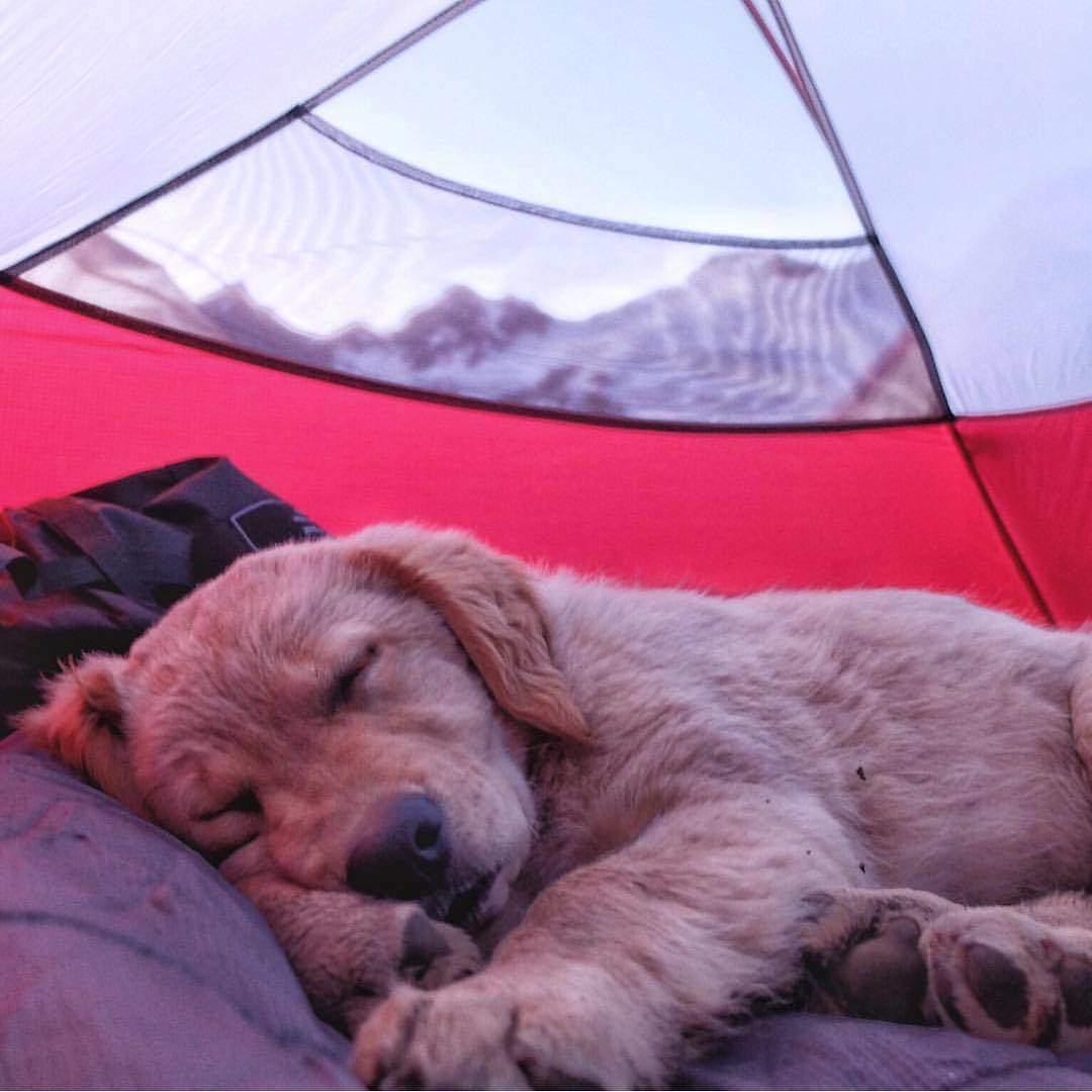 tende-campeggio
