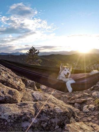 In campeggio con Fido