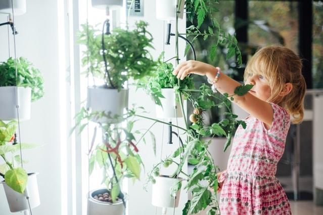 coltivazione-idroponica
