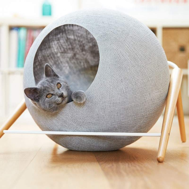 cucce-di-design-gatti