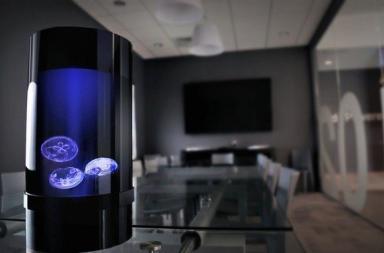 Jellyfish Aquarium, un elegante acquario per meduse