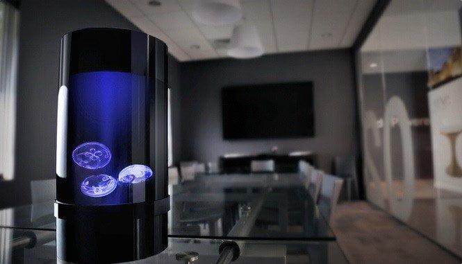Jellyfish aquarium un elegante acquario per meduse design miss - Aquarium meduse design ...