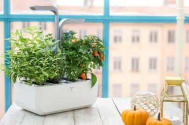 Véritable, un sistema smart di coltivazione indoor