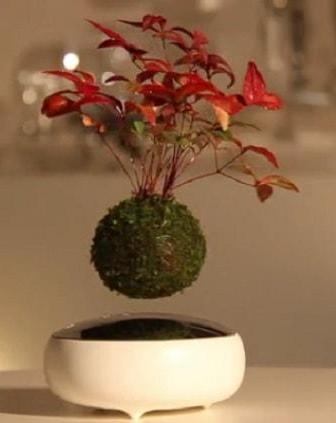 Air Bonsai, una pianta che volteggia nella stanza