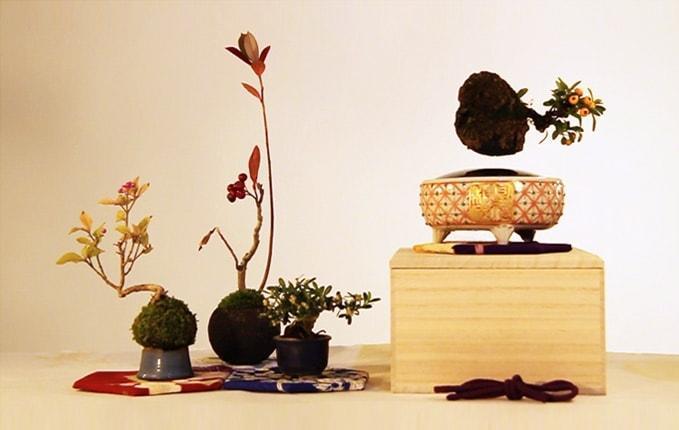piante-giapponesi