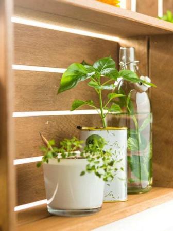 Eco-design: carta e colori trasformati in piante