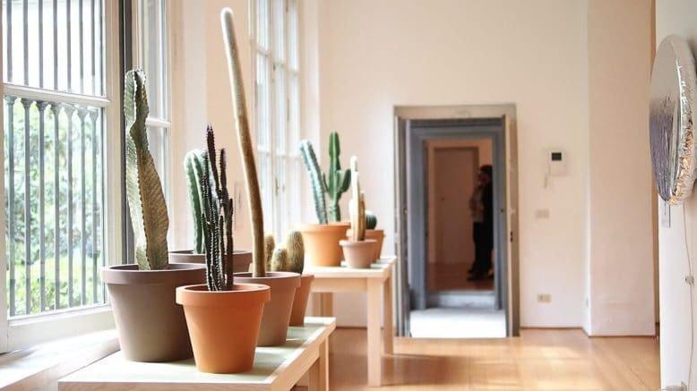 cactus-musicali