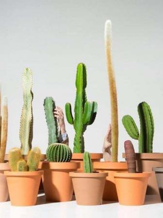 Cactunes, cactus trasformati in strumenti musicali