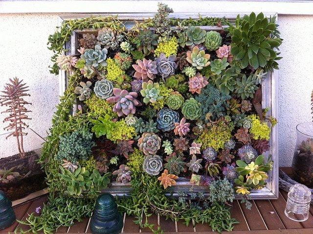composizione-verticale-di-piante-grasse-