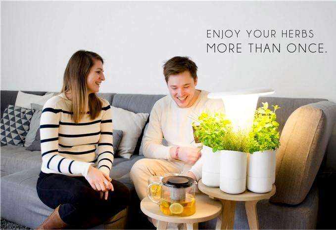 piante-aromatiche