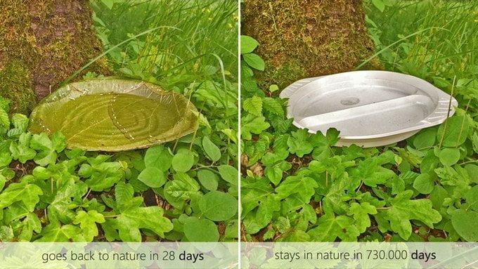 piatti-biodegradabili