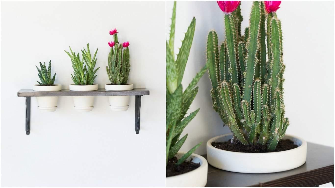 Giardini verticali per decorare le pareti - Design Miss