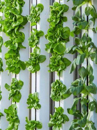 Giardini verticali per decorare le pareti
