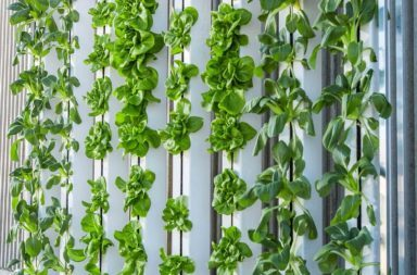 vertical-farm