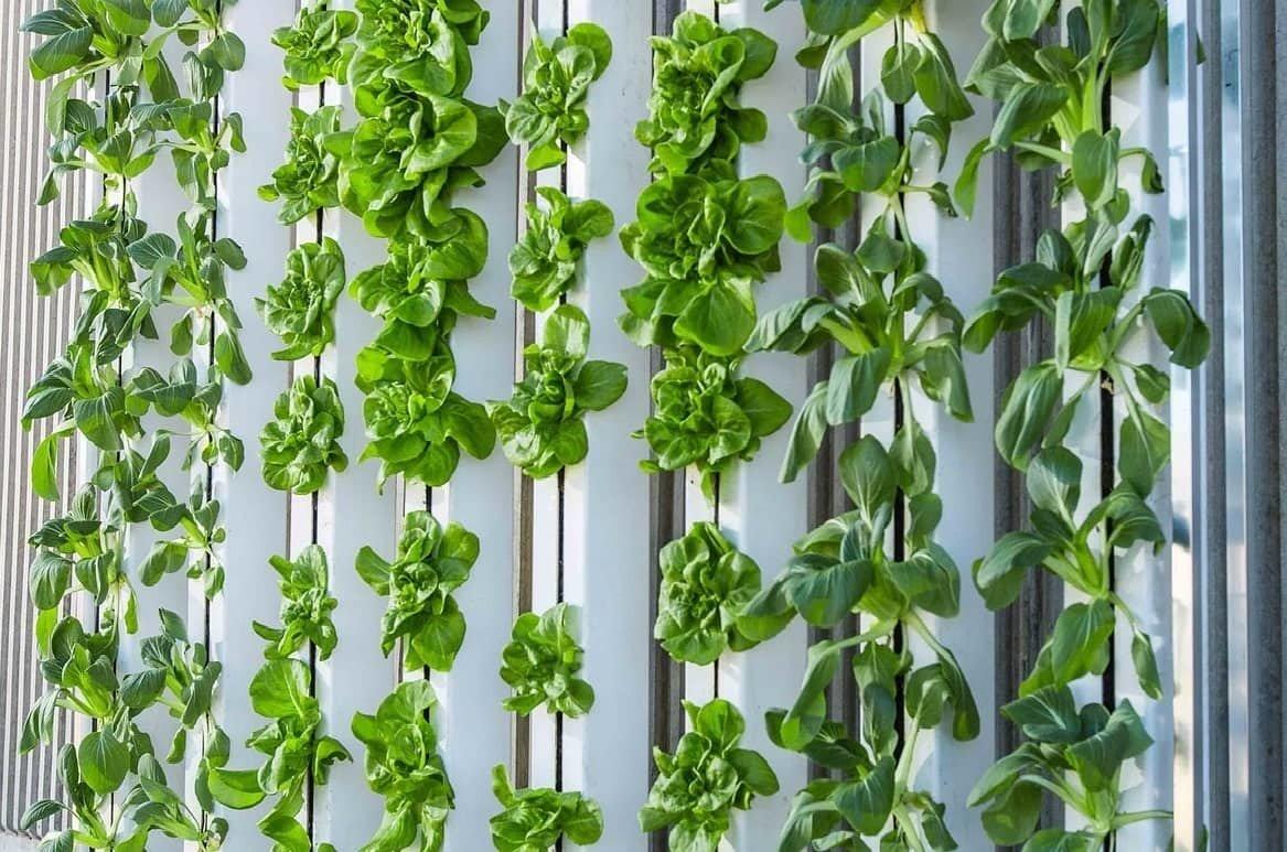 Giardini Verticali Fai Da Te giardini verticali per decorare le pareti - design miss