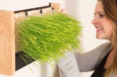 EcoQube Frame, il giardino verticale che nutre e arreda
