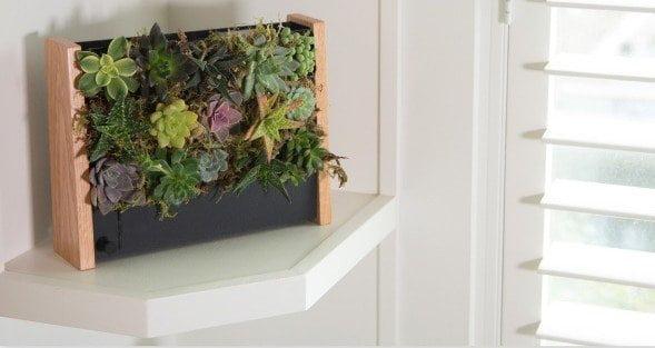 Ecoqube frame il giardino verticale che nutre e arreda for Green arreda