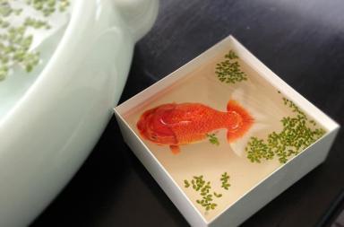 I pesci nella resina di Keng Lye