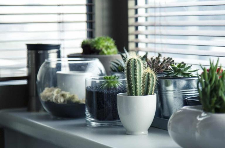 Come arredare la casa con le piante grasse