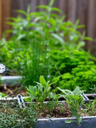 Orto in casa: come e cosa coltivare in autunno e inverno